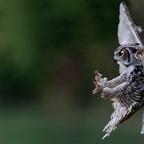 Landing by Max Rinaldi on 500px.com
