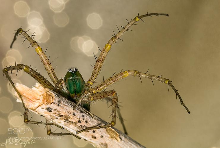 Photograph Spider G11 by Habib Zadjali on 500px