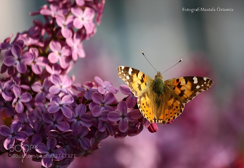 Photograph Butterfly by Mustafa Öztemiz on 500px