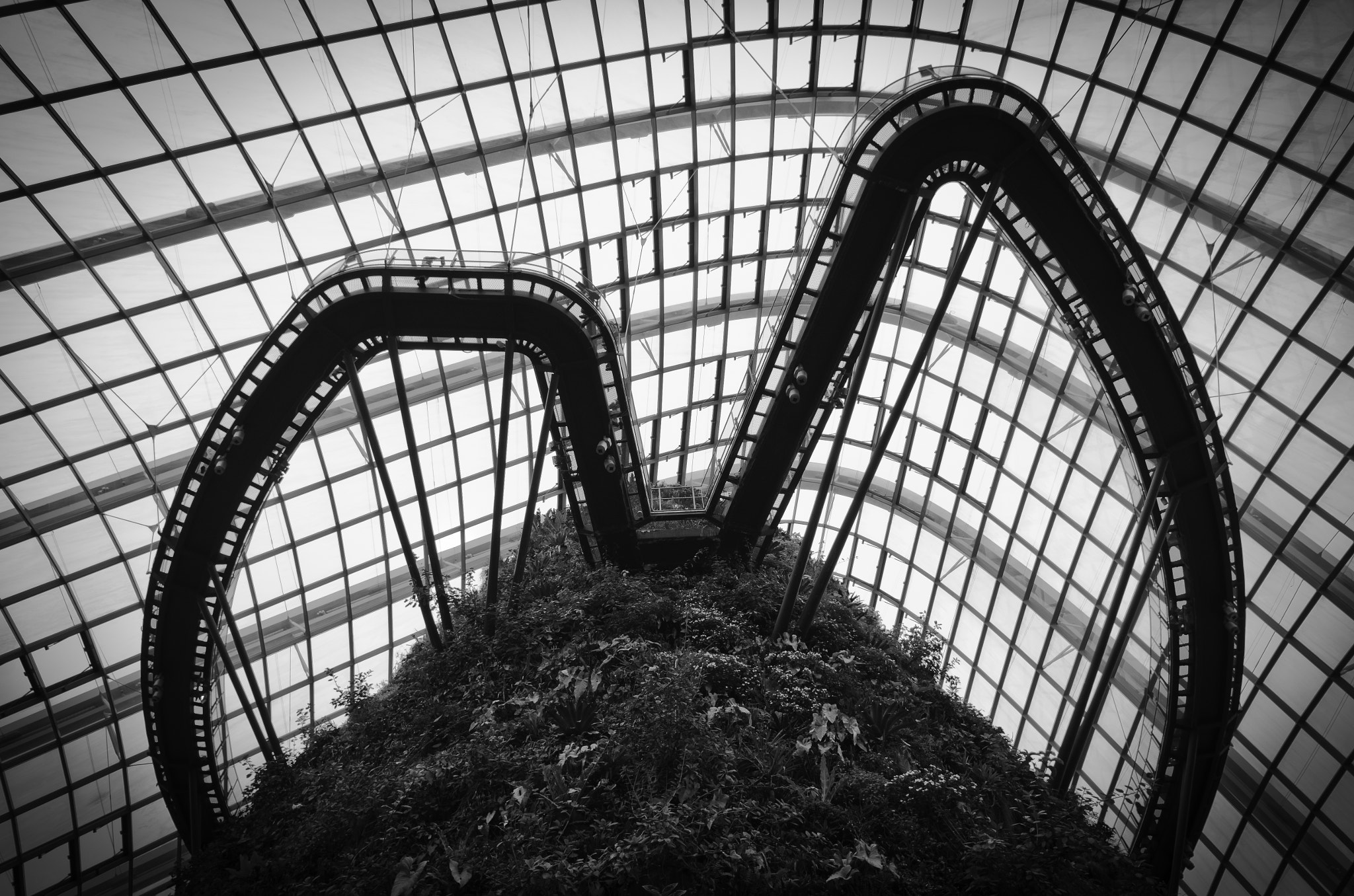 Photograph Forest in a Dome by Edmund Choy on 500px