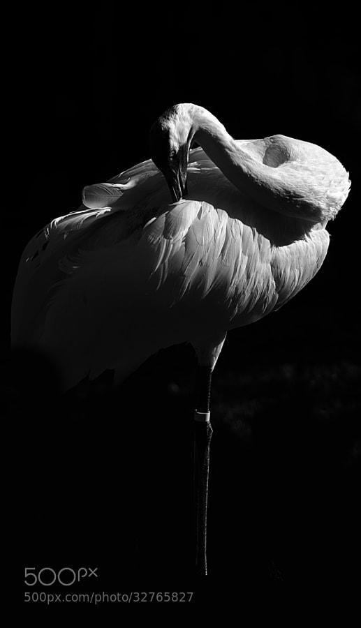 No, it's not a flamingo.