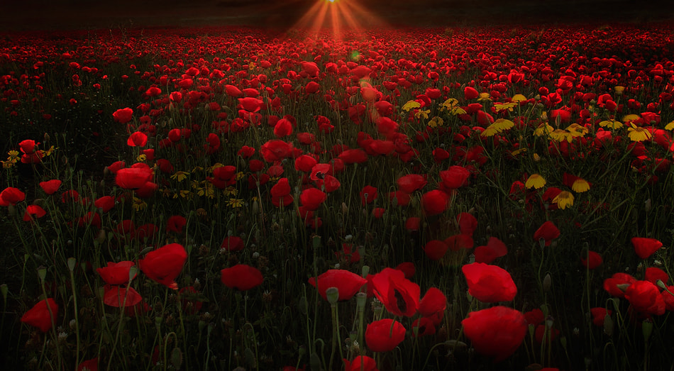 Photograph Red by Basheer Sheick-Yousif on 500px