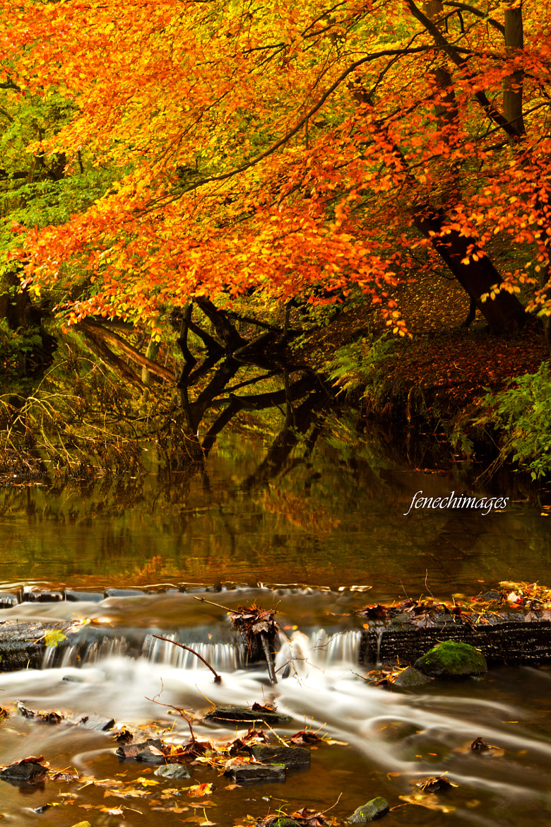 Photograph Autumn stream by Peter Fenech on 500px