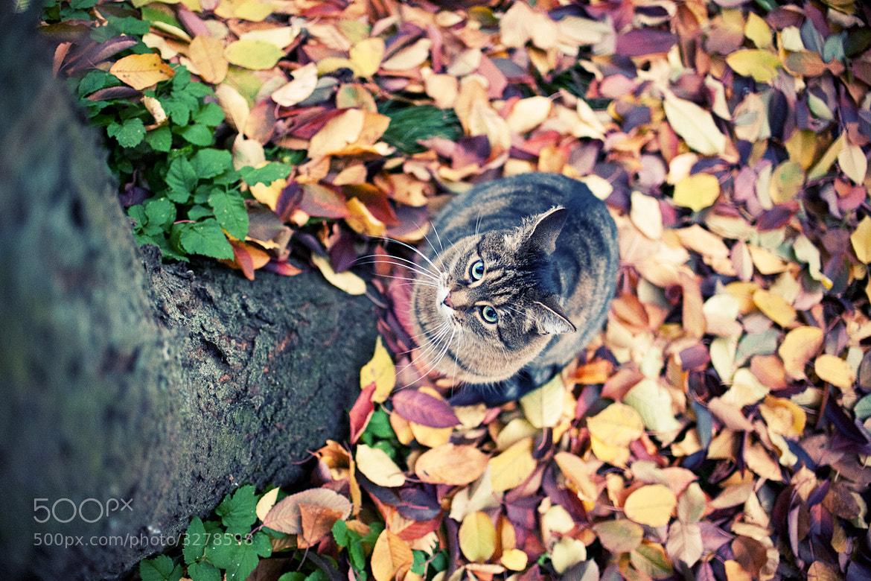 Photograph autumncat. by Daniel Schmitt on 500px
