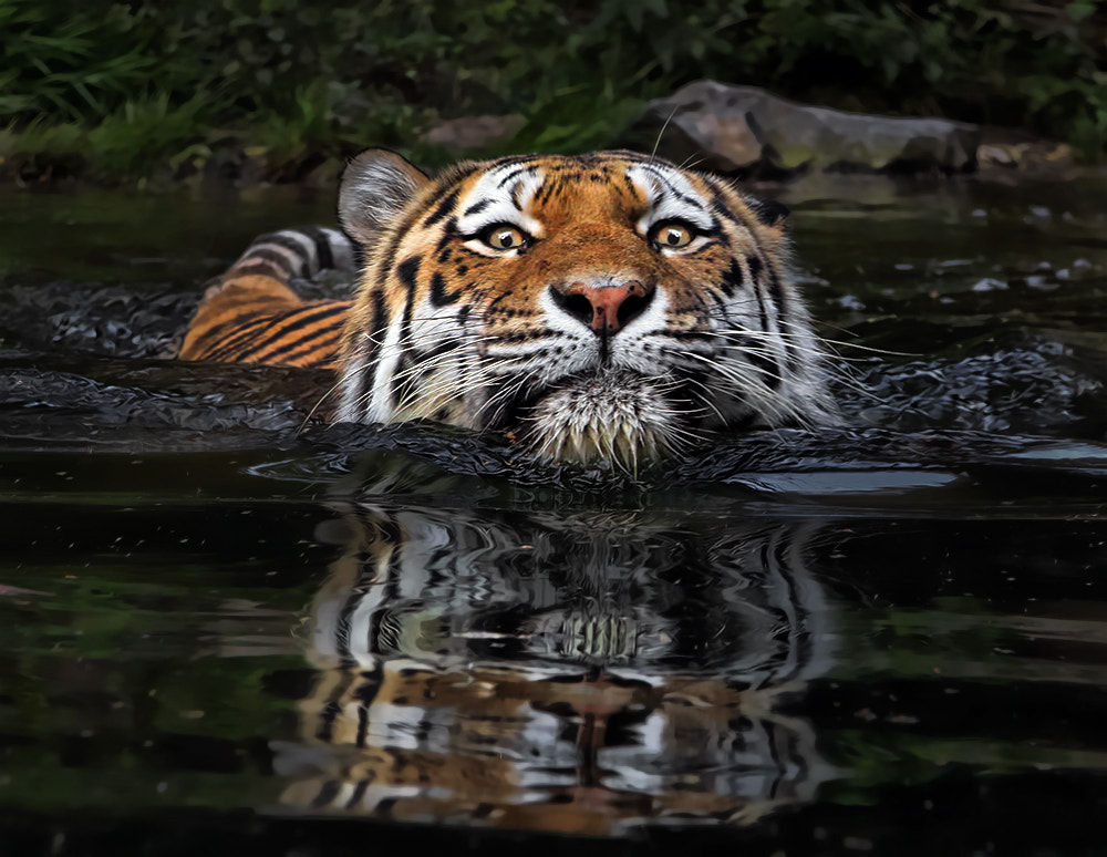 Photograph Crossing by Klaus Wiese on 500px