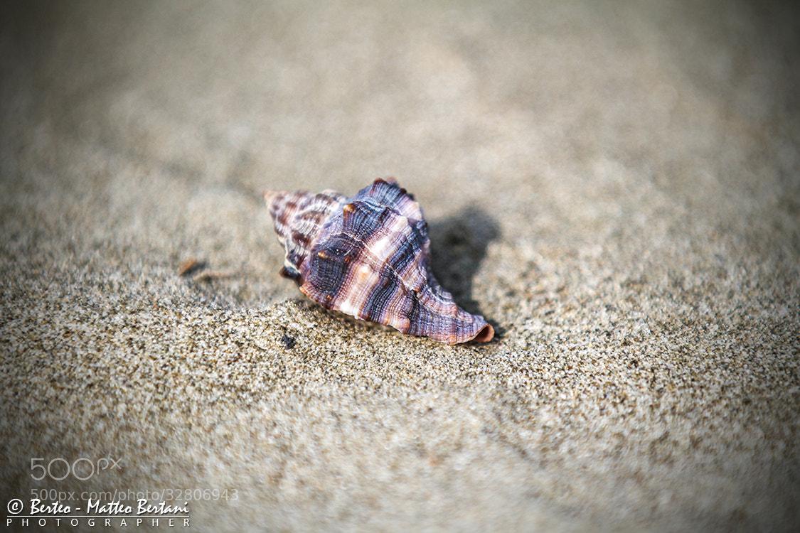 Photograph The shell by Matteo Bertani - Berteo on 500px