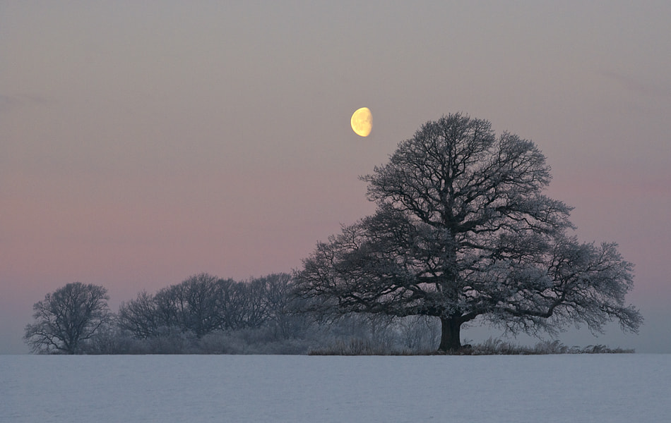 Photograph The Oak and the Moon by Hans Jørgen Lindeløff on 500px