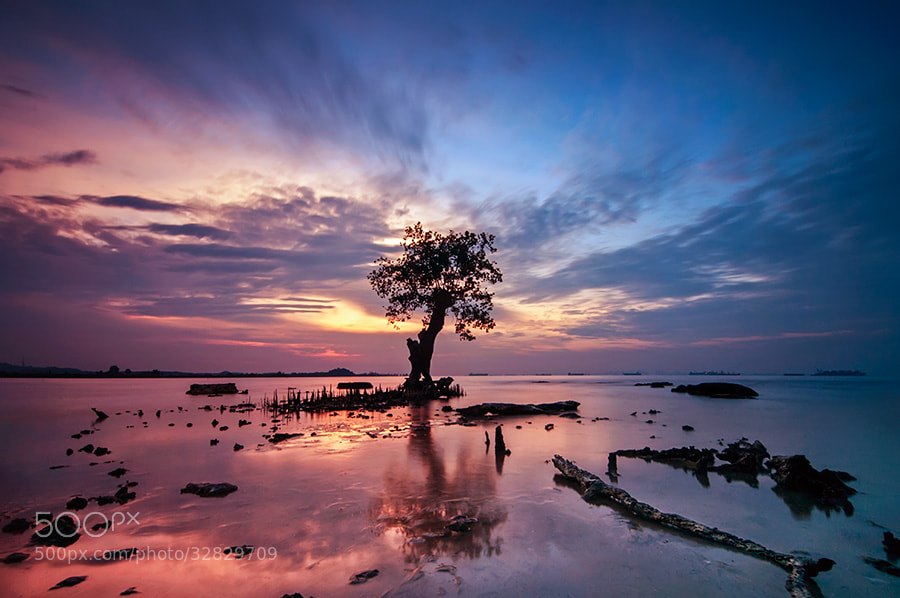 Photograph The Tree #2 by Calles Gunawan on 500px