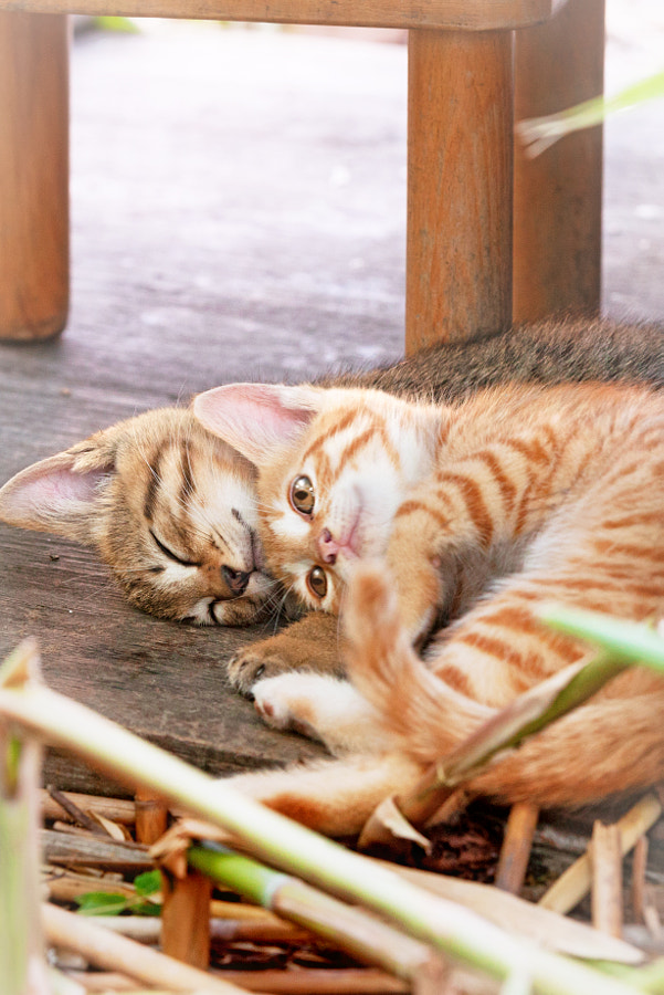 500px.comのSeiji MamiyaさんによるThis is the best place for a nap!