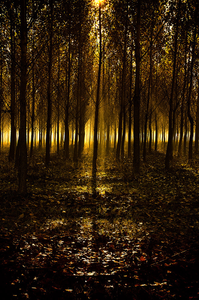 Photograph Lights in the woods by Andy 58 on 500px