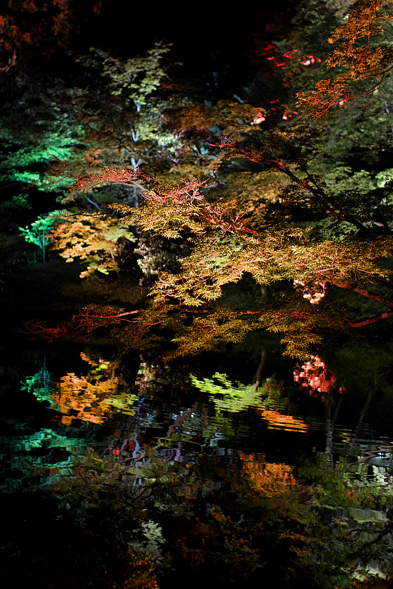 Photograph Night Pond by Azul Obscura on 500px