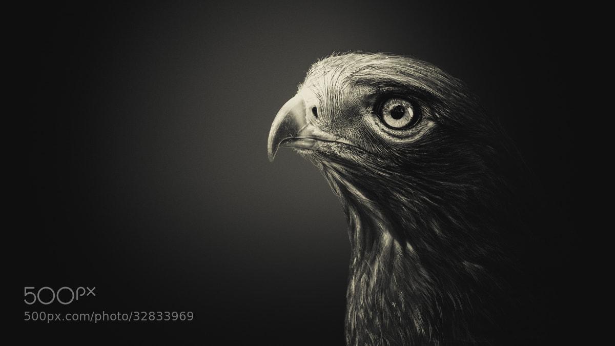 Photograph Black Hawk by Shay Wax on 500px