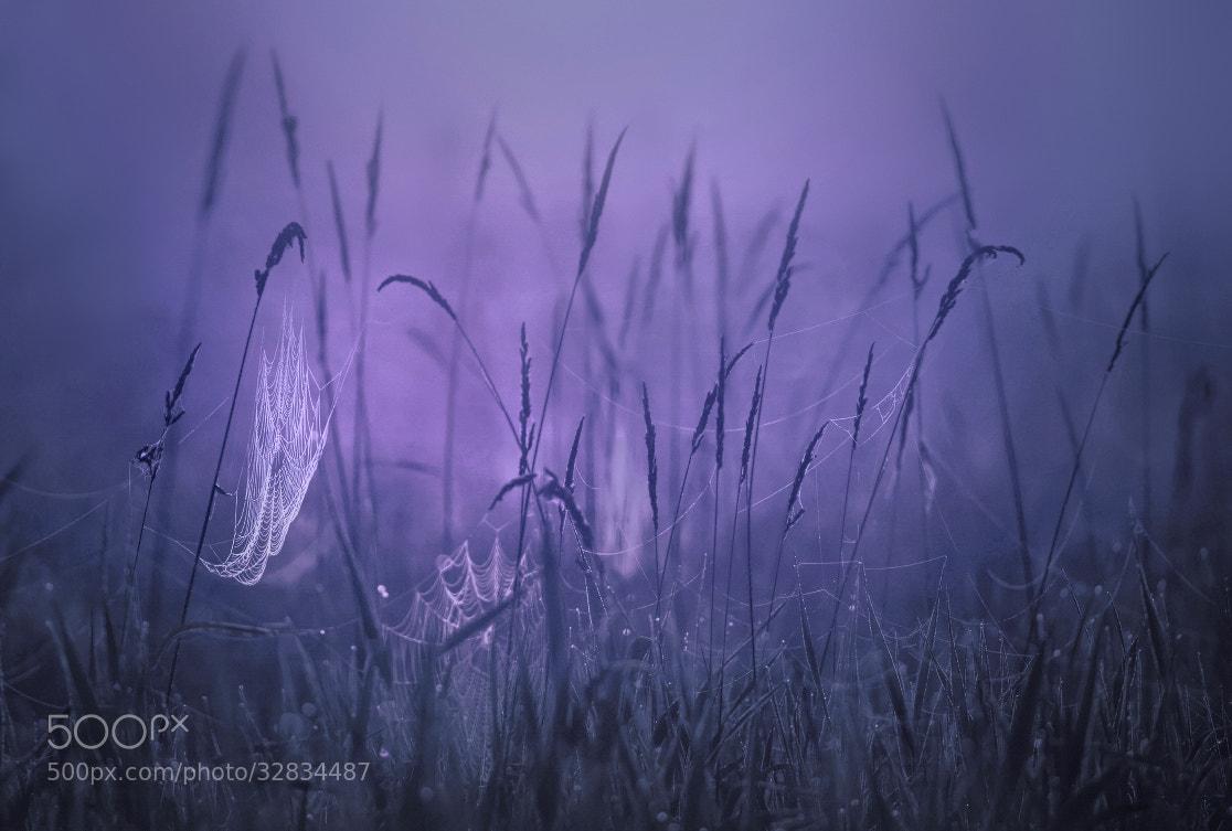 Photograph Twilight by Kilian Schönberger on 500px