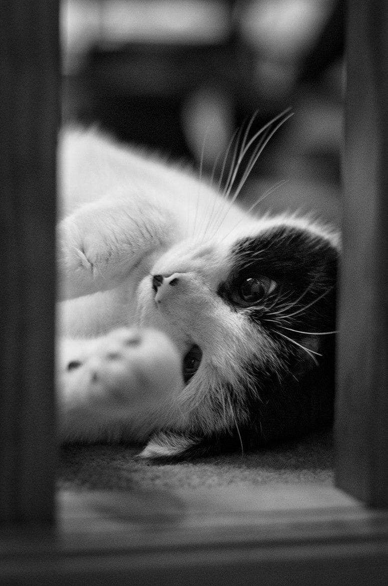 Photograph Cat in the spindles by Matthew Collinge on 500px