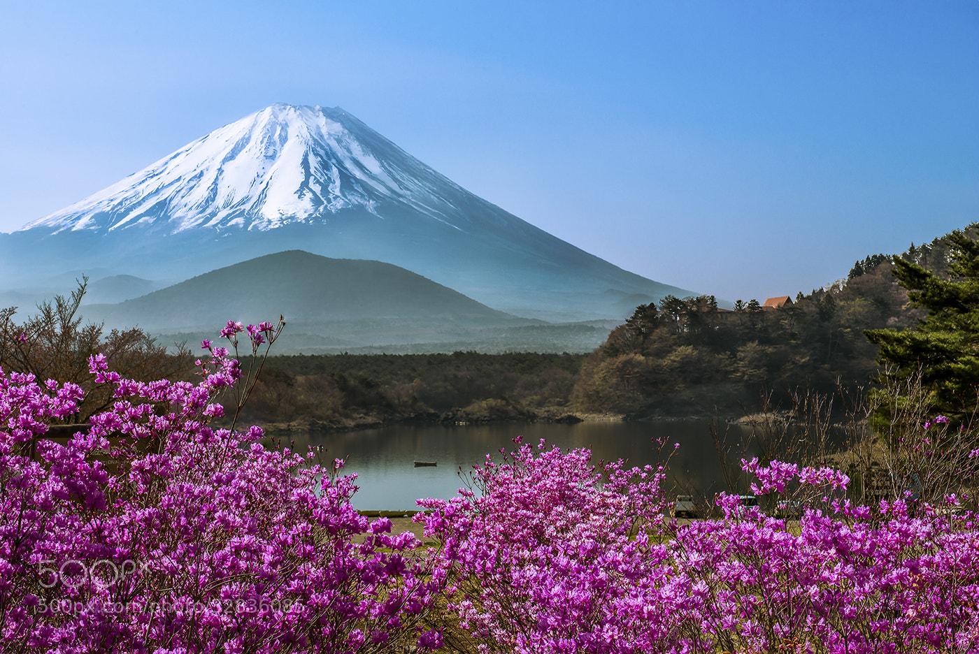 Photograph Lake Shojiko - Springtime by Natasha Pnini on 500px