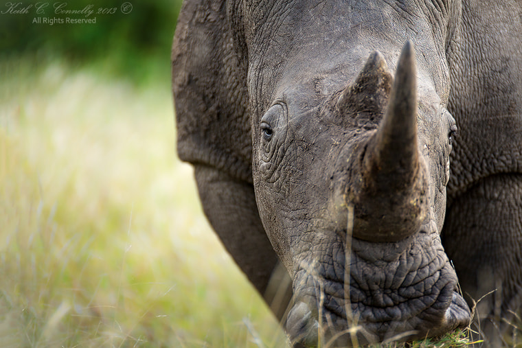 Photograph Birds Eye Rhino by Keith Connelly Photographics on 500px