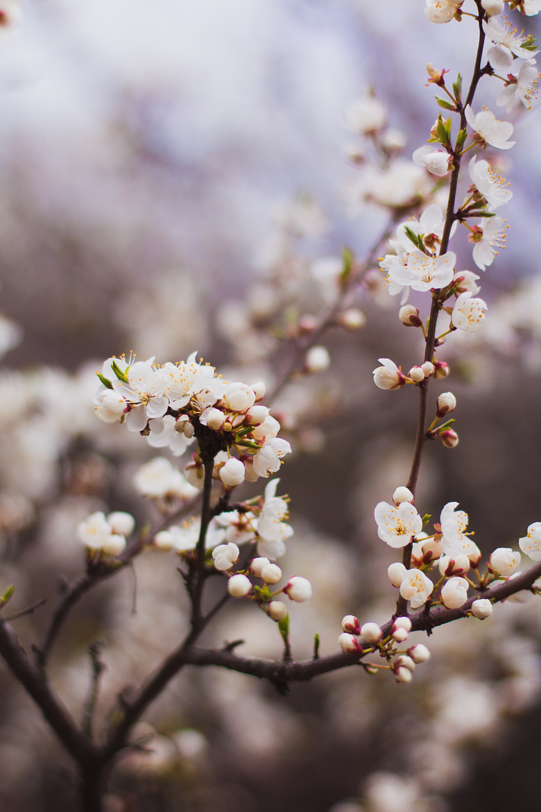 Photograph blossom by Maria Duka on 500px