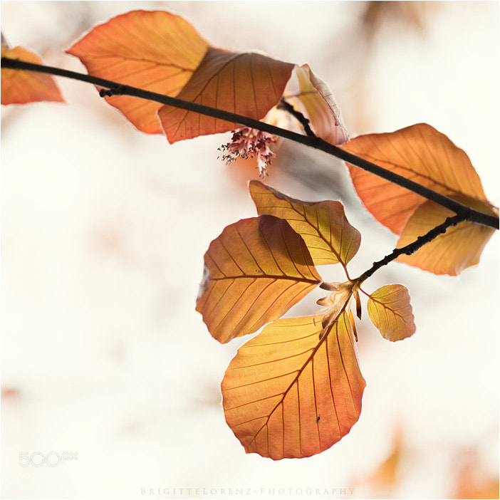 Photograph leaves by brilorenz on 500px