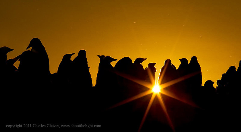 Photograph Gentoo Penguin Rookery at sunset by Charles Glatzer on 500px