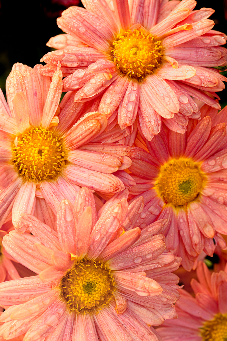 Photograph Flowers by Joseph Calev on 500px