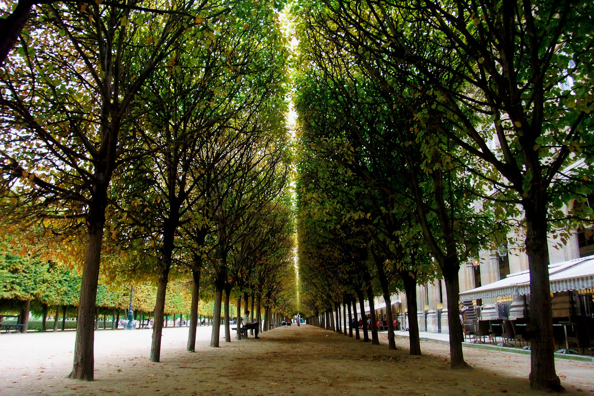 Photograph Parisian park by damianope  on 500px