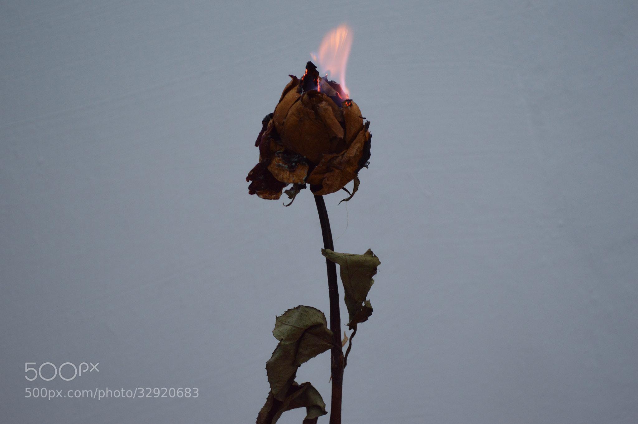 """Photograph """"Girl on fire..."""" by Tháfyne Braz on 500px"""