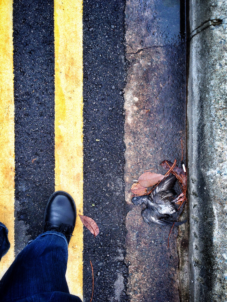 Photograph Fallen bird at roadside 2 by Teelip Lim on 500px
