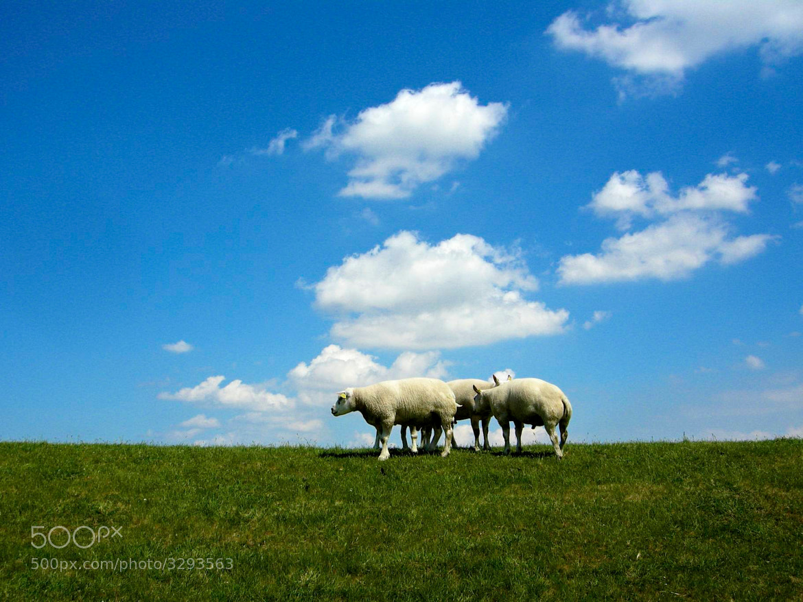 Photograph Count the sheep! by Guido Merkelbach on 500px