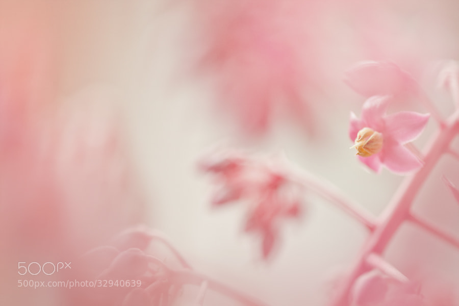 Photograph Pink by Zalynn Zhong on 500px