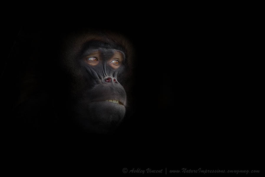 Photograph Man in The Mask by Ashley Vincent on 500px