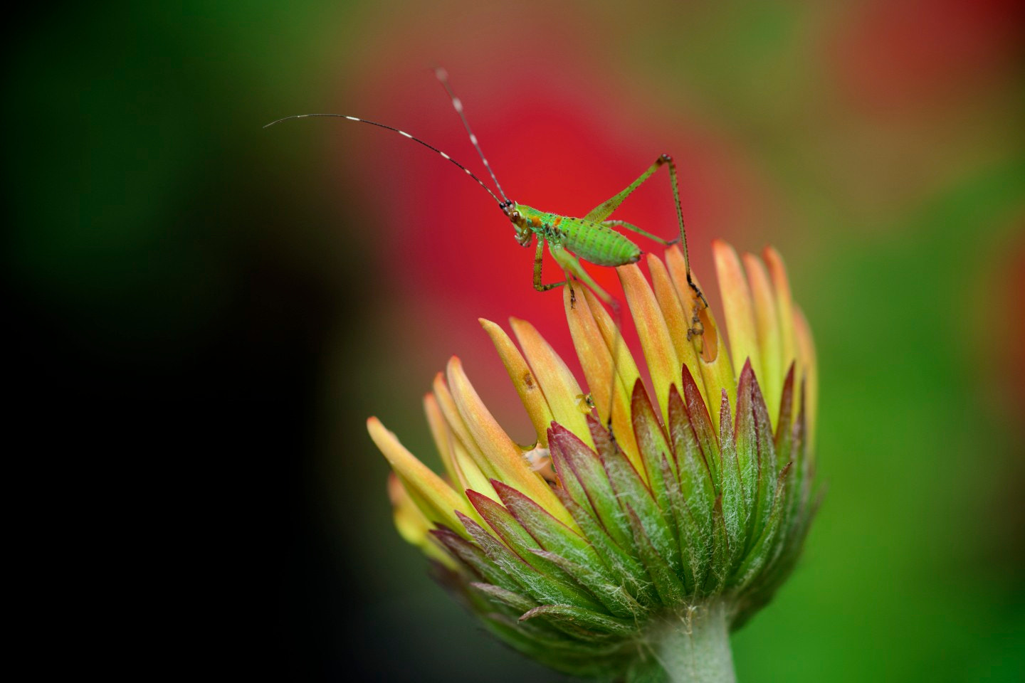 Photograph Katydid by Allen-a99 on 500px