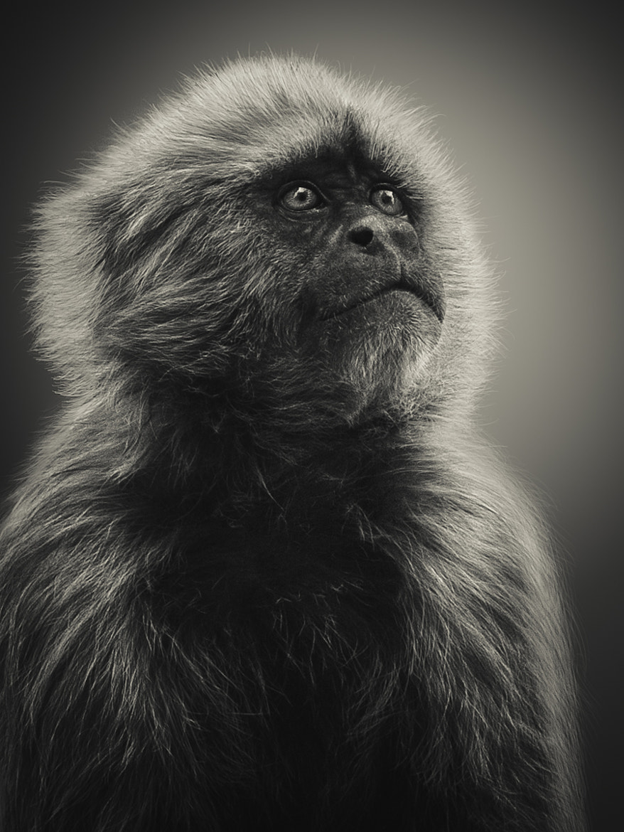 Photograph Light & Fur by Shay Wax on 500px