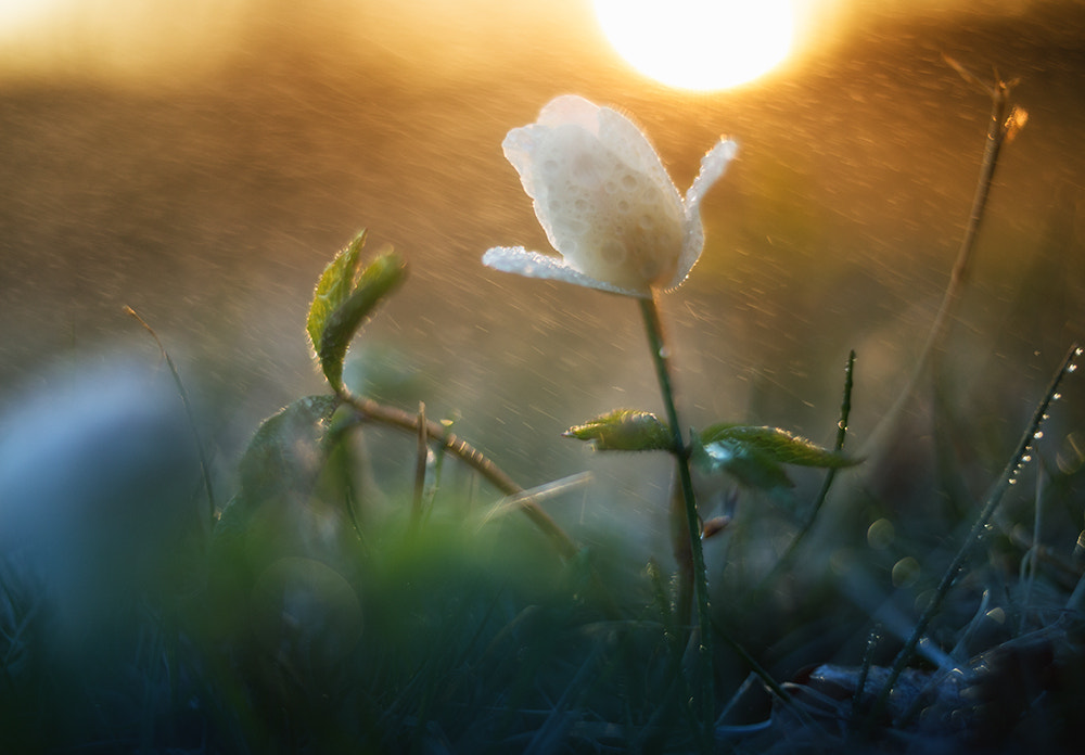 Photograph flores in procella imbrem by Mikael Sundberg on 500px