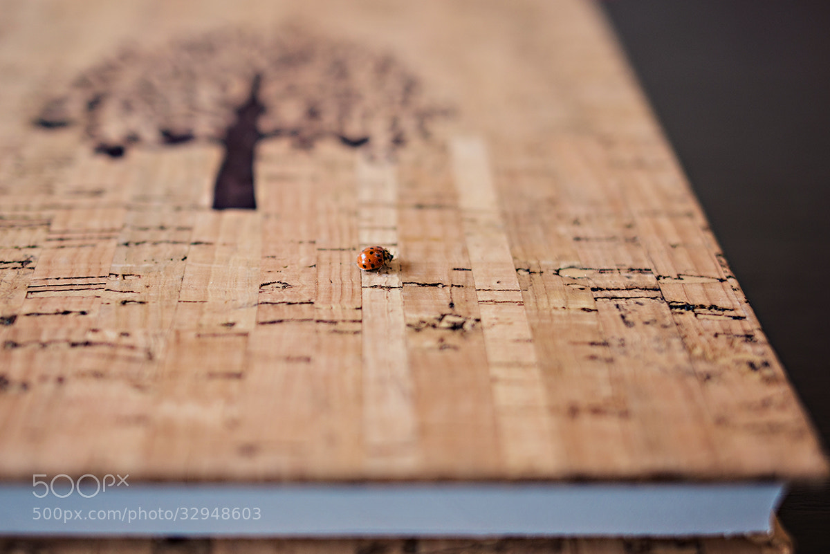 Photograph Lady bird by Antonija Nekic on 500px