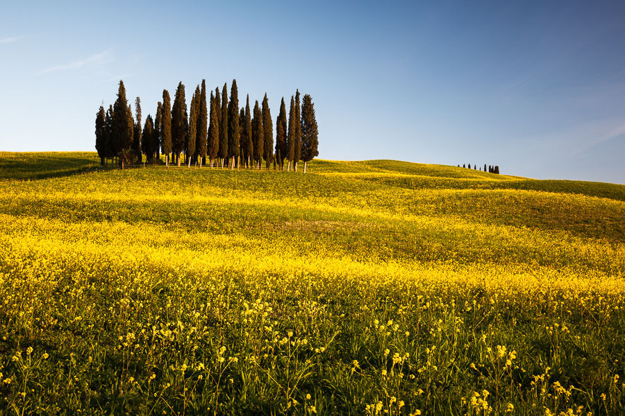 Photograph Italy – Little Cypresses  by Fabrizio Fenoglio on 500px