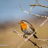 Robin | Clive Walkden Photographer