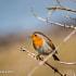 Robin Posing