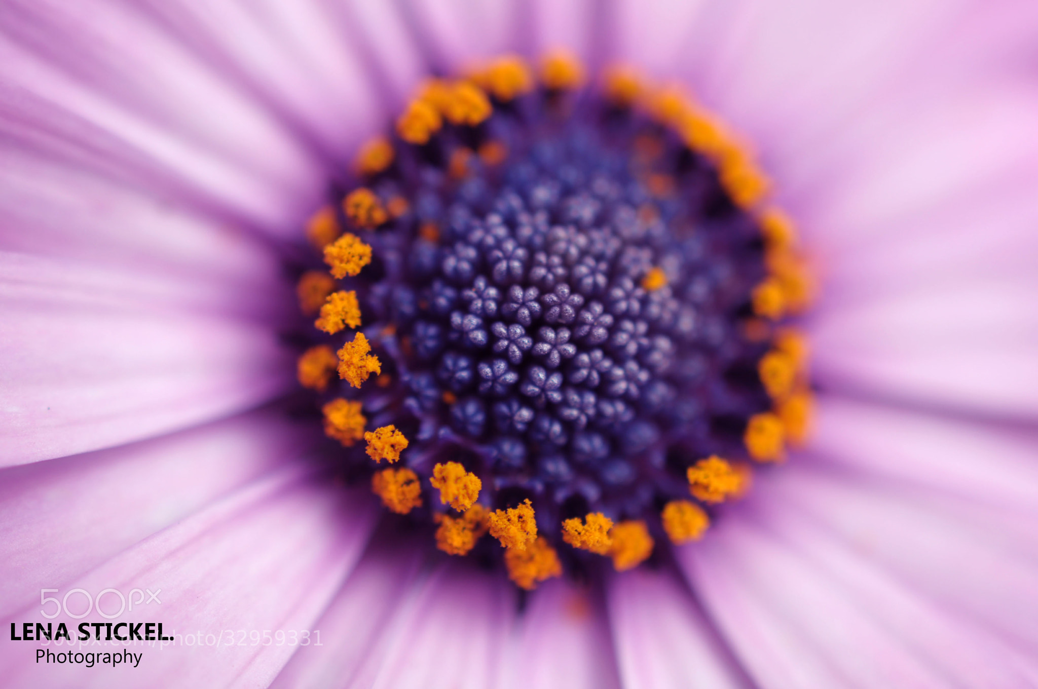 Photograph Flower by Lena S on 500px