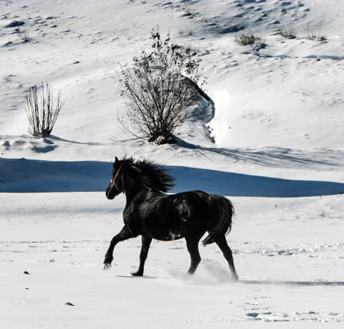 Photograph Freedom by Dan Alexandru on 500px