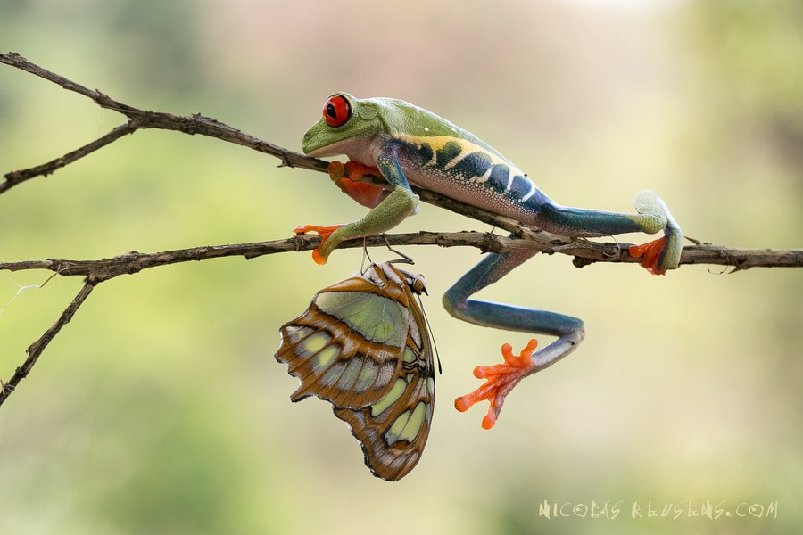 Photograph morning meal or awkwardness by Nicolas Reusens on 500px