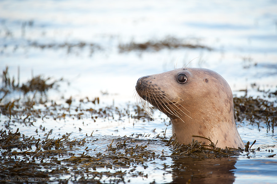 Photograph Reflective Seal by Will Nicholls on 500px