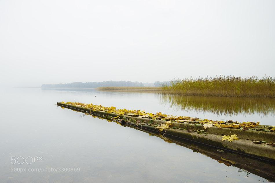 Photograph Autumnal by Rimantas Bikulčius on 500px