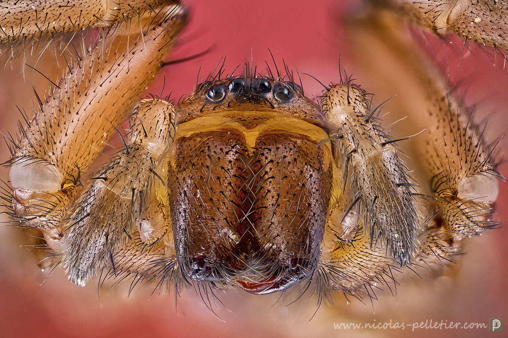 Photograph Spider by Nicolas Pelletier on 500px