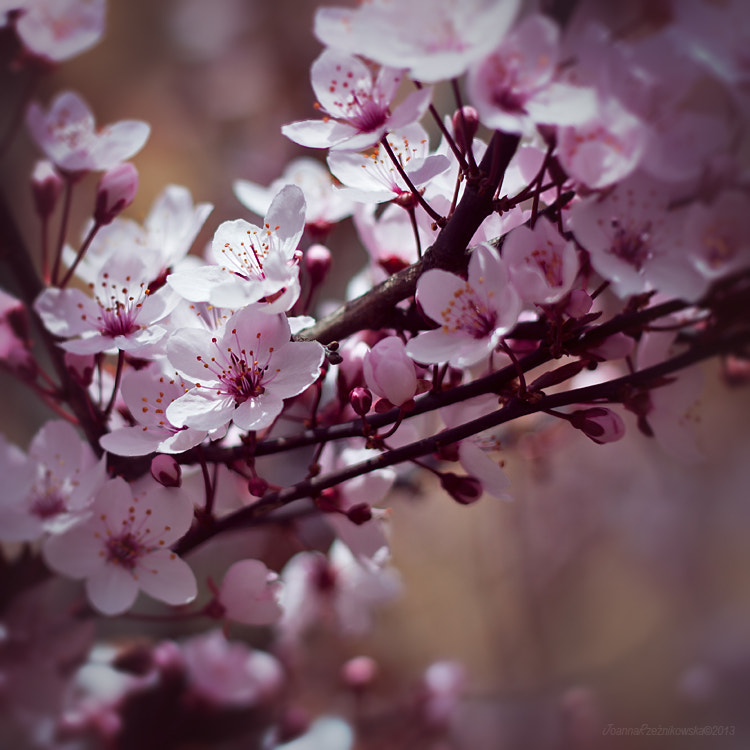 Photograph Lovely Spring III by Joanna Rzeźnikowska on 500px