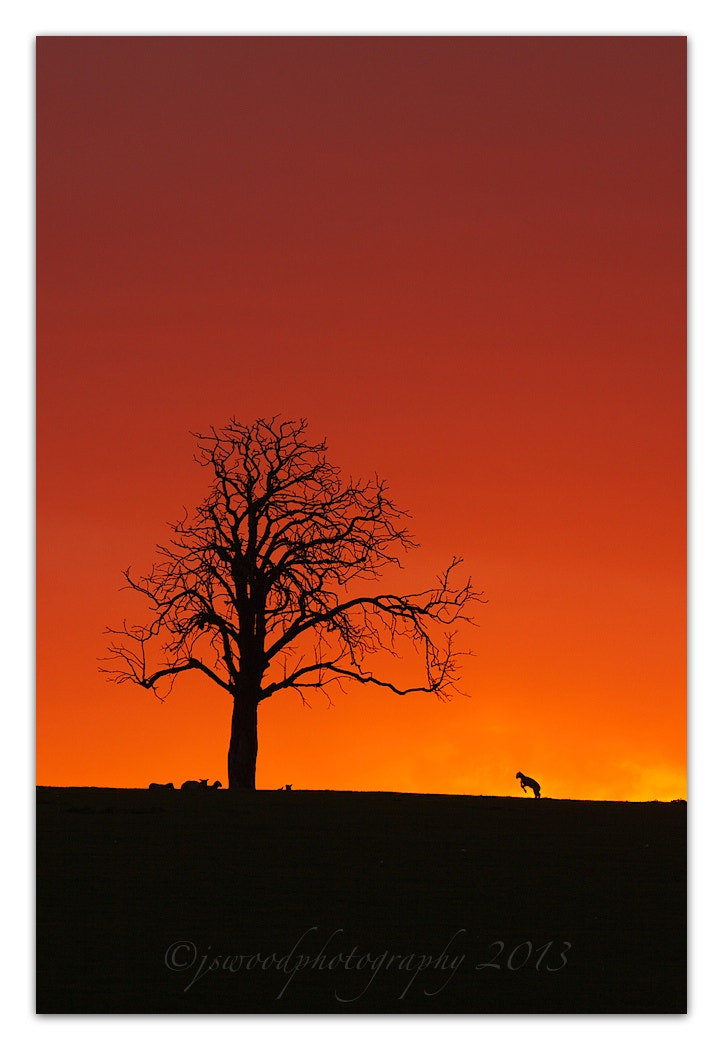 Photograph Lone tree Sunset by Jason Wood on 500px