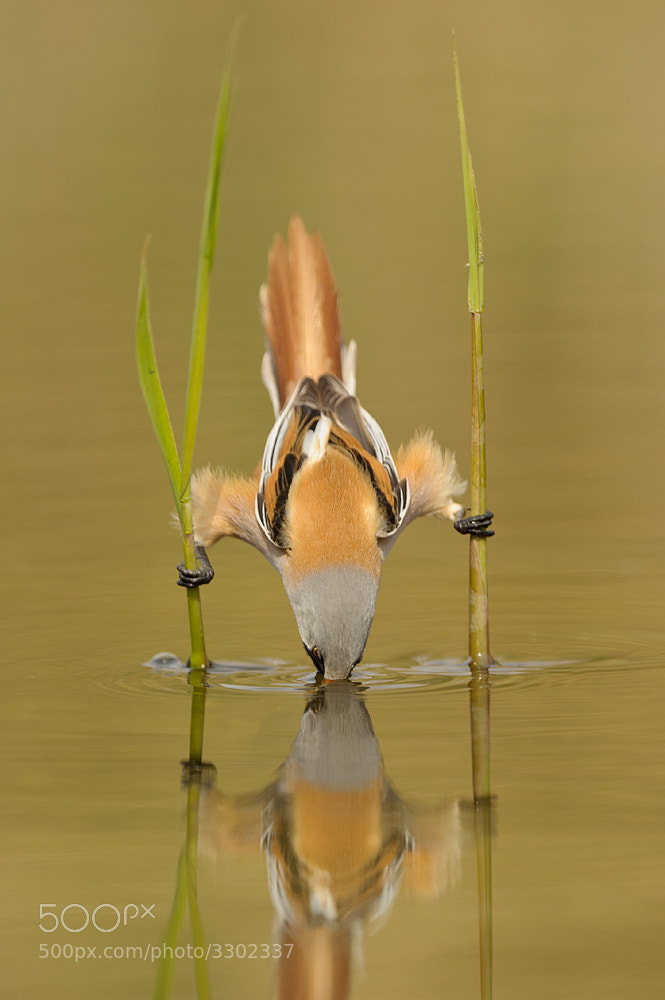 Photograph Show off.... by Edwin Kats on 500px