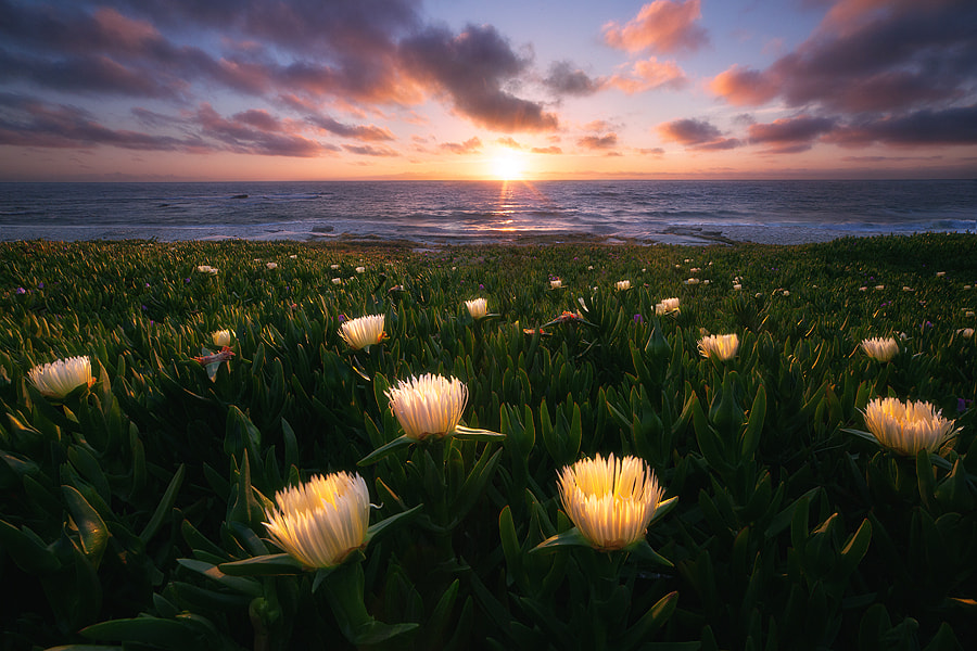 Photograph solar powered (san diego sea figs) by Max Vuong on 500px