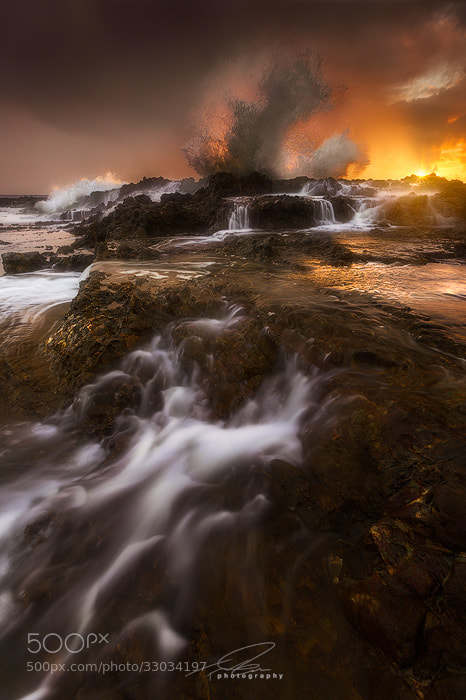 Photograph Golden Dragon by Ted Gore on 500px