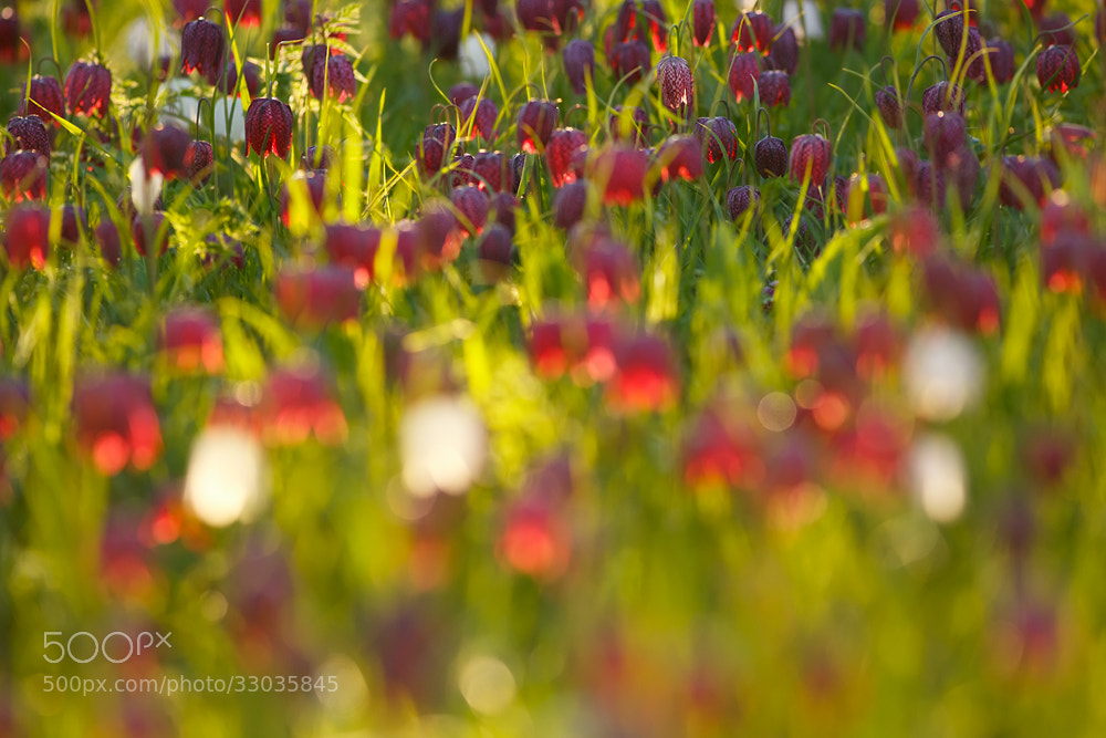 Photograph All these little Lanterns by Roeselien Raimond on 500px