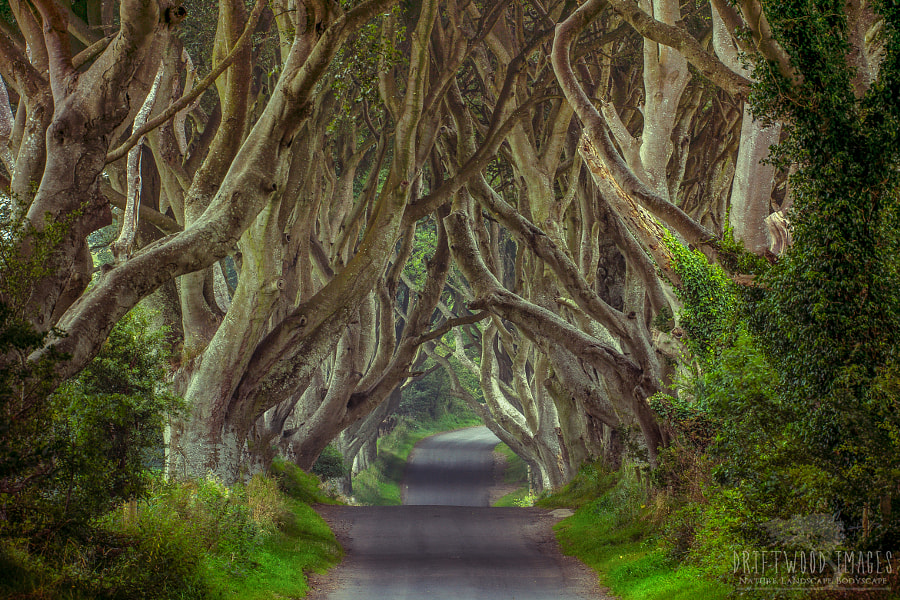 The Dark Hedges | Northern Ireland by James Pion on 500px.com